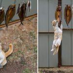 Kedilerin Hırsızlıkta 1 Numara