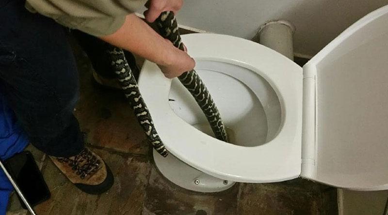 Kadını Tuvalette Piton Isırdı