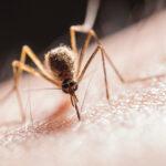 Sivrisineklerden Kurtulabilirsiniz