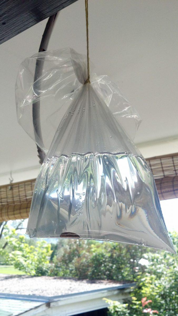 Poşetle Sivrisineklerden Kurtulun