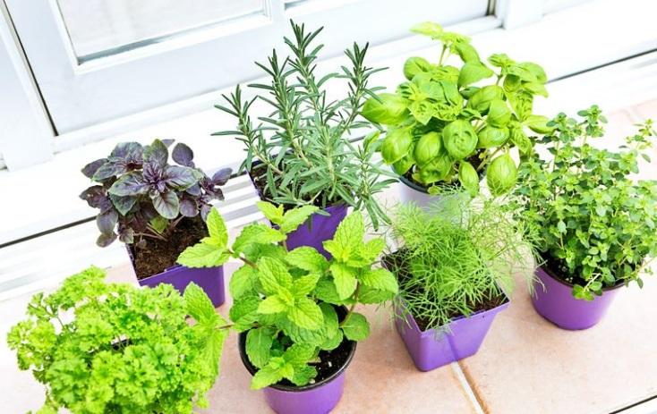 bitkileri
