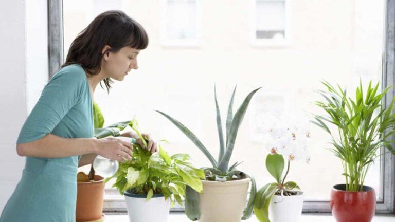 Evde Çiçek Bakımı İçin Pratik Bilgiler